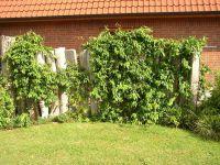 Gartenanlage_und_Pflanzungen_12